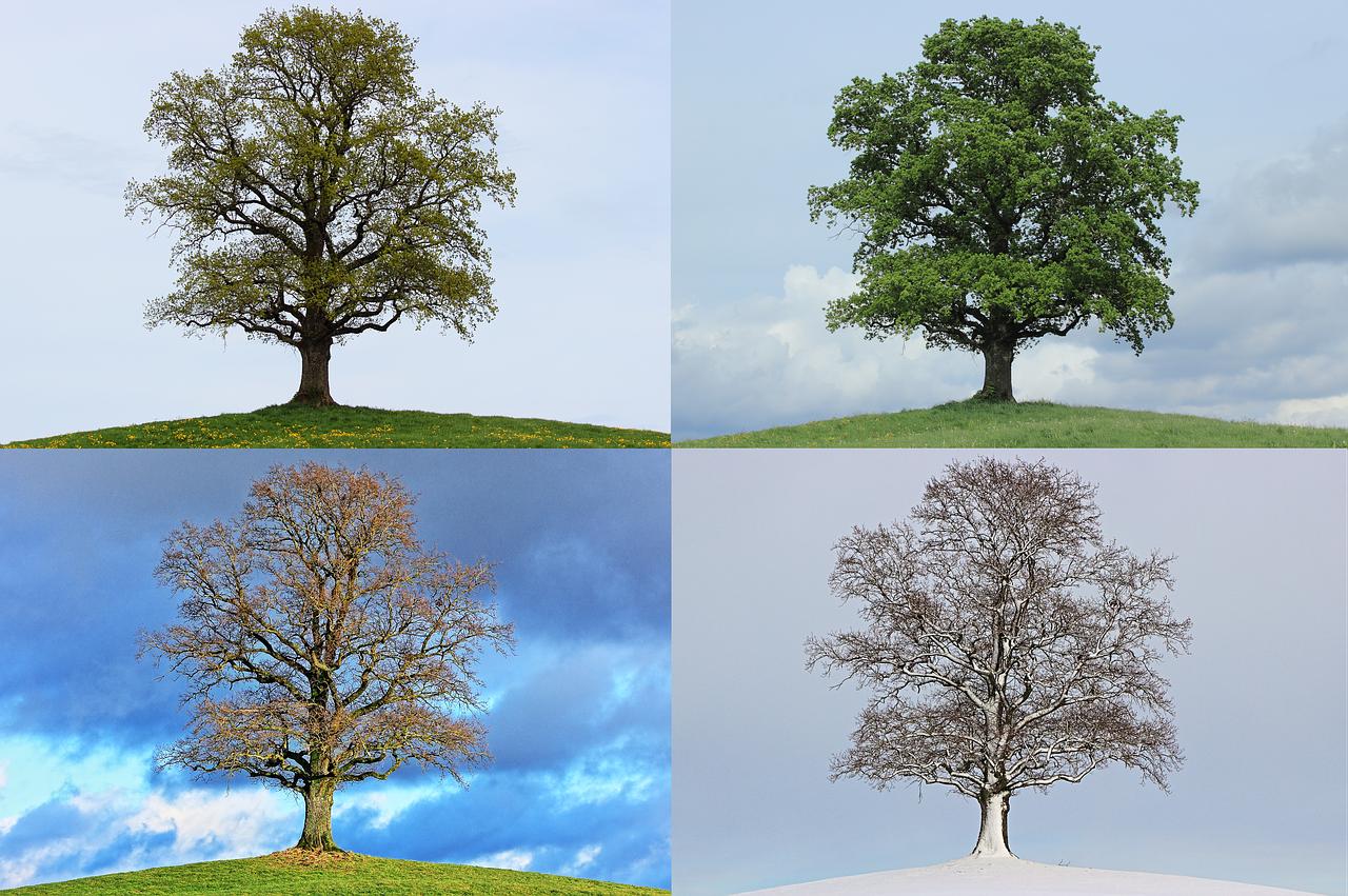 tree-776932_1280