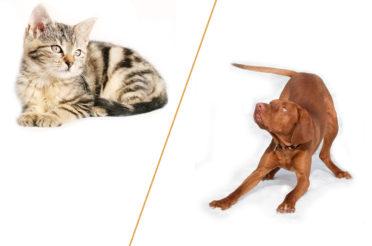 Katze oder Hund?