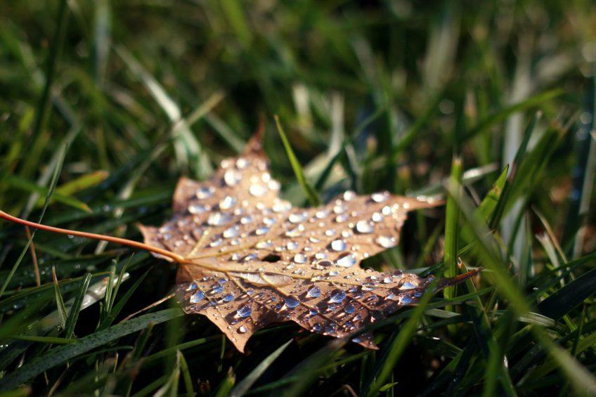 Entscheiden wir uns gegen ein trauriges Gemüt während der kalten Jahreszeit.